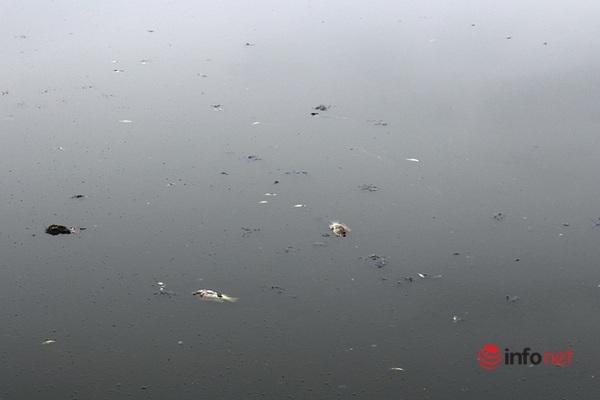 """""""Ngộp thở"""" vì mùi tanh hôi nồng nặc ở hồ điều hòa công viên trung tâm TP  Vinh"""
