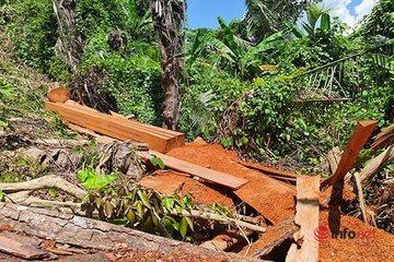 Chủ tịch tỉnh Thừa Thiên - Huế: Xử lý nghiêm trách nhiệm chủ rừng để mất rừng