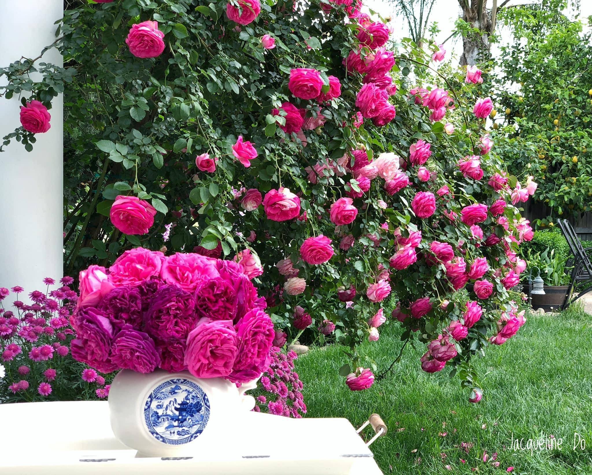Bà mẹ sở hữu vườn hồng cổ tích: 'Mê hoa như cơn dịch lây lan nhanh'