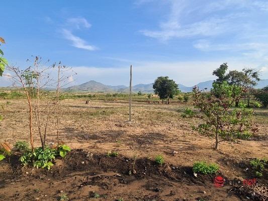Giao 438 ha rừng làm kinh tế, doanh nghiệp 'bỏ chạy', cả đất lẫn rừng 'biến mất'