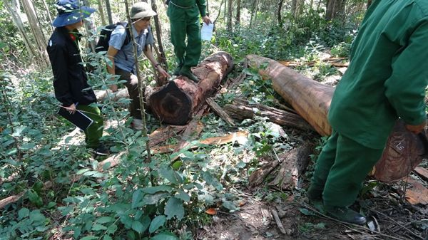Vụ tàn phá khu Bảo tồn thiên nhiên Ea Sô: Khởi tố 37 bị can