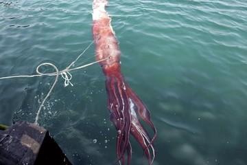 Phát hiện mực khổng lồ dài 13 mét dưới vùng biển sâu