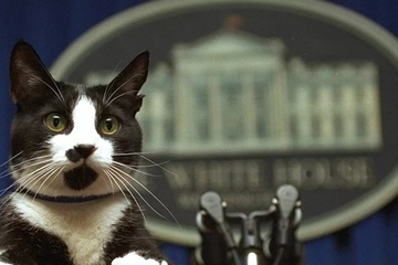 Tổng thống Biden nuôi thêm mèo ở Nhà Trắng
