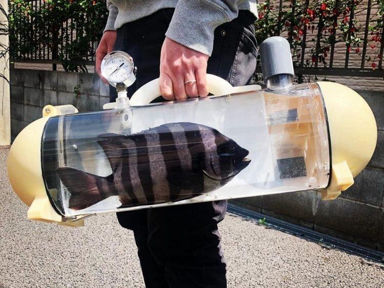 Túi trong suốt độc lạ dành riêng cho cá cảnh đi khắp muôn nơi