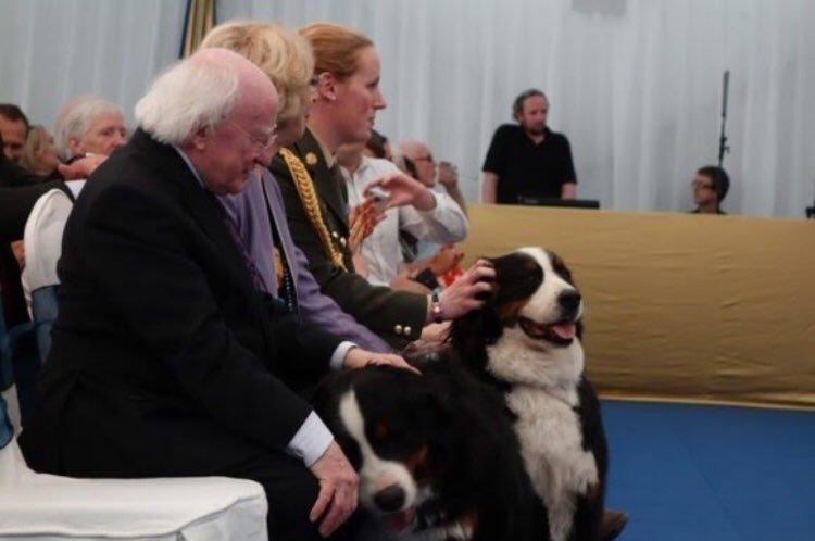 Chó cưng của Tổng thống Ireland gây 'sốt' trong cuộc phỏng vấn vì quá đáng yêu