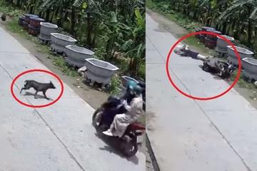 """Clip: Chó thả rông lao ra đường khiến 2 cô gái ngã """"sấp mặt"""""""