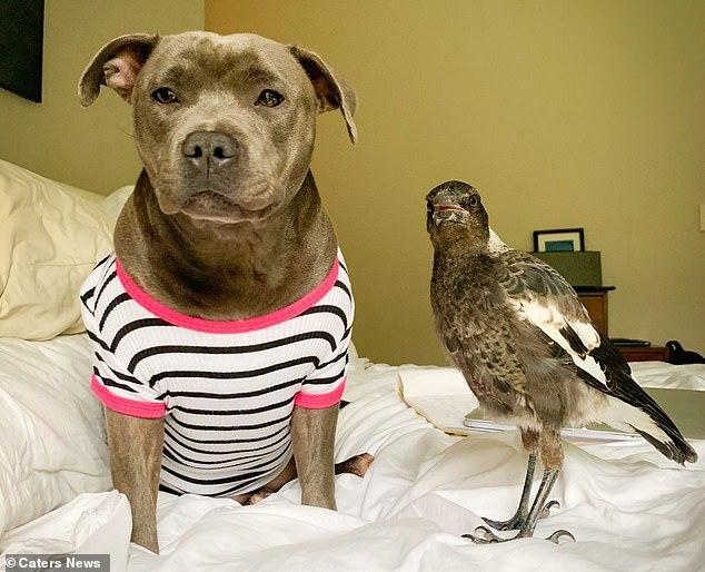 Chó kết thân với chim ác là và cái kết khiến ai cũng cảm động