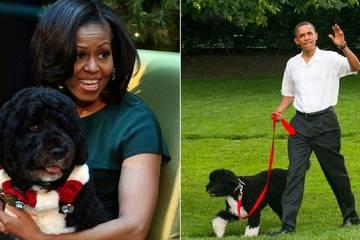 Chú chó gắn bó hơn 10 năm với gia đình cựu Tổng thống Mỹ Obama qua đời