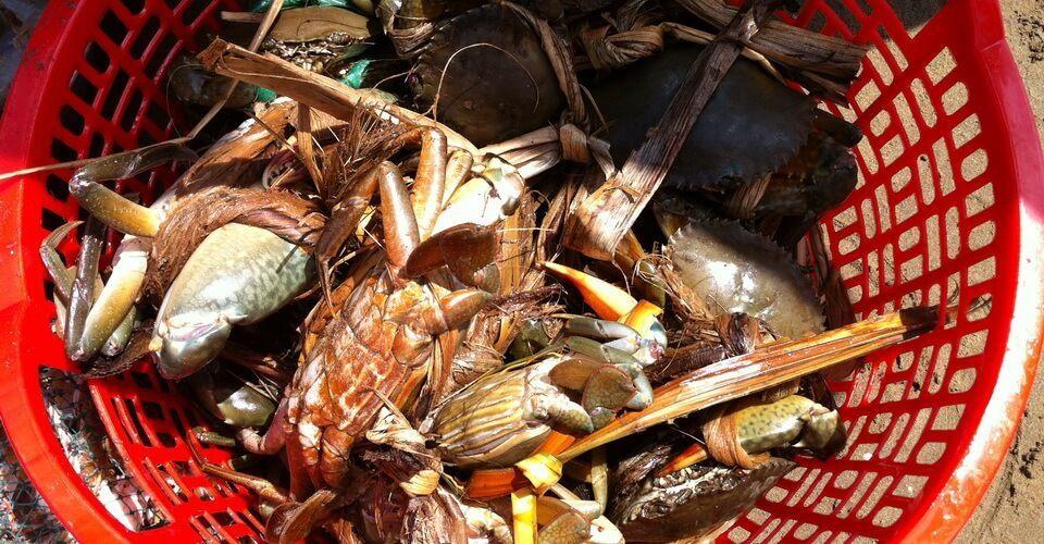 Hỗ trợ thiết thực cho người dân nuôi cua biển ở Bến Tre