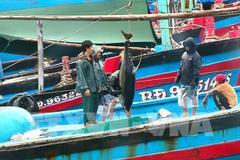 Bình Định đề nghị dừng tham gia dự án Cảng cá Tam Quan có vốn 540 tỷ đồng