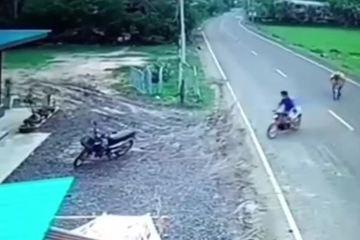 Bất ngờ bị bò cái đuổi, người đàn ông rồ ga xe máy bỏ chạy 'té khói'
