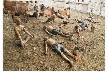 Hoảng hồn trước cách chữa Covid-19 dân gian trong trại nuôi bò ở Ấn Độ