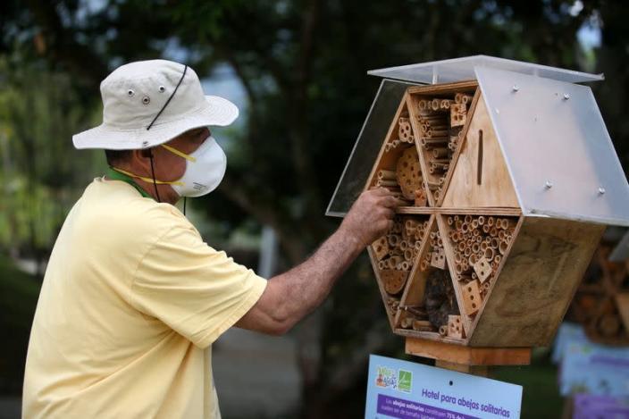 Ong nghỉ ngơi trong khách sạn tre sau mùa bận rộn ở Colombia