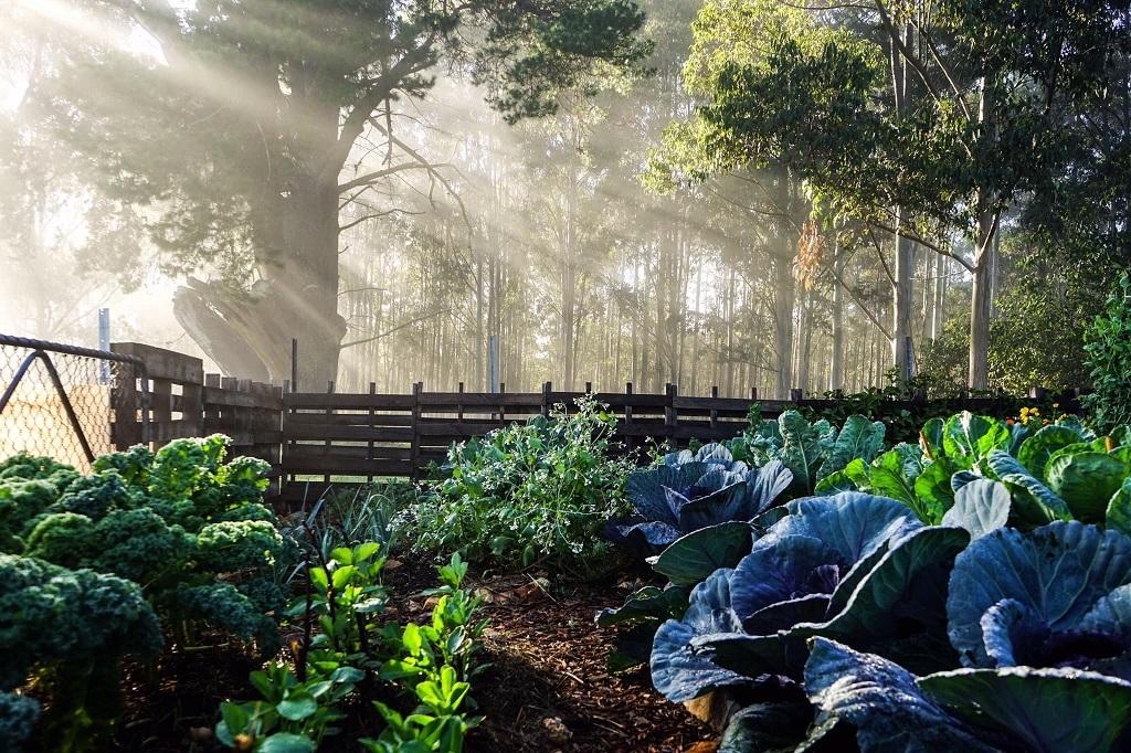 Khu vườn 200m2 thay đổi cuộc sống của cô gái thành thị chính hiệu