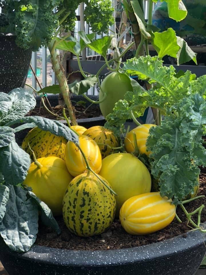 """Bà mẹ """"mát tay"""" làm vườn sân thượng như nông dân thực thụ"""