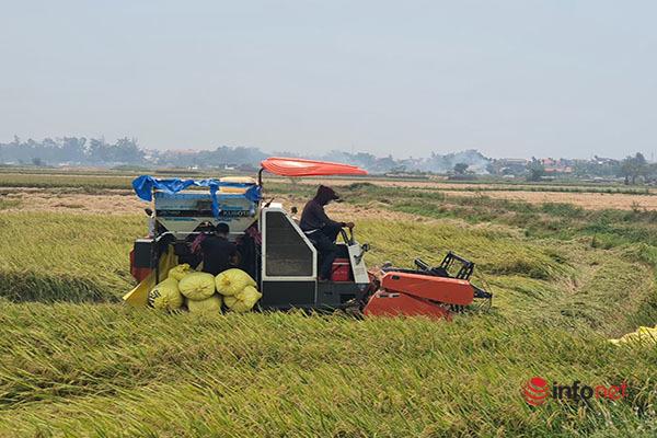 gặt lúa,Thừa Thiên Huế,khẩu trang,phòng dịch,vụ Đông Xuân,nông nghiệp