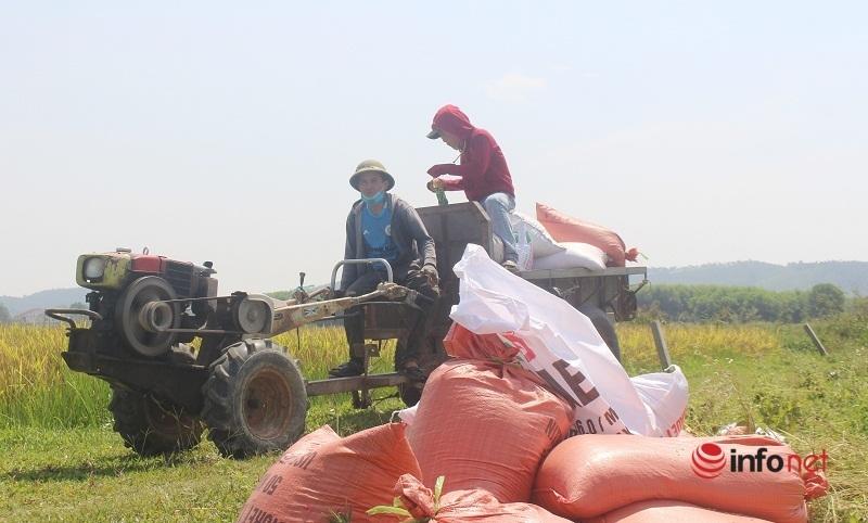 Nghệ An: Chuyển lúa thuê, nhiều người kiếm tiền triệu mỗi ngày