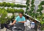 """Vườn rau thủy canh công dụng """"2 trong 1"""" của ông bố Việt tại Mỹ"""
