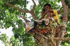 Chàng trai Ấn Độ mắc Covid-19 tự cách ly 11 ngày trên cây