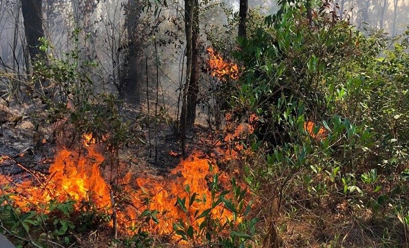 Quảng Nam: Rừng thông bốc cháy ngùn ngụt, hàng trăm người vất vả dập lửa