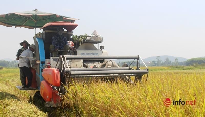 gặt lúa,máy gặt,khan hiếm,vất vả,Nghệ An,nông dân