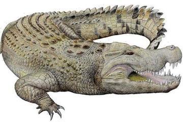 Phát hiện hộp sọ khổng lồ của cá sấu 8 triệu năm tuổi