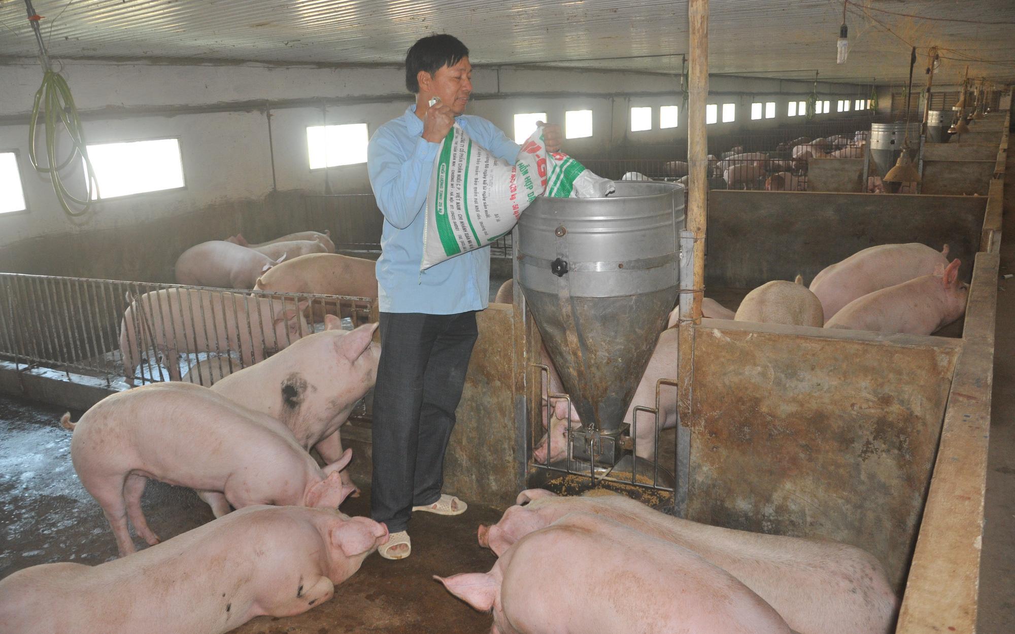 Giá thức ăn tăng, lợn hơi giảm, giá thịt vẫn neo cao