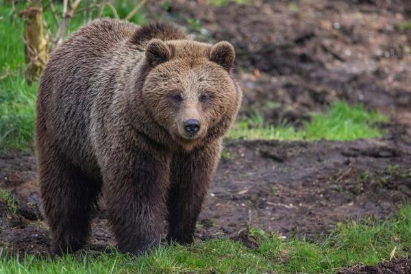 gấu,sở thú,tấn công