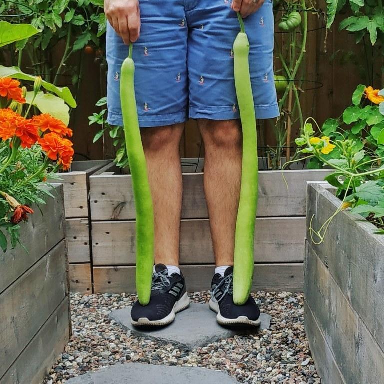 Chàng trai thành phố cải tạo sân nhà thành khu vườn xanh mướt