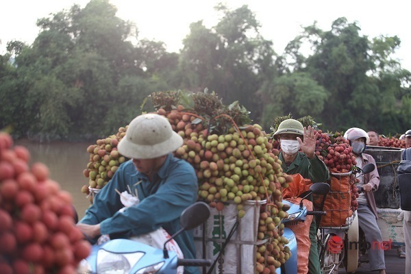 Bắc Giang lên phương án tiêu thụ vải thiều trong đại dịch