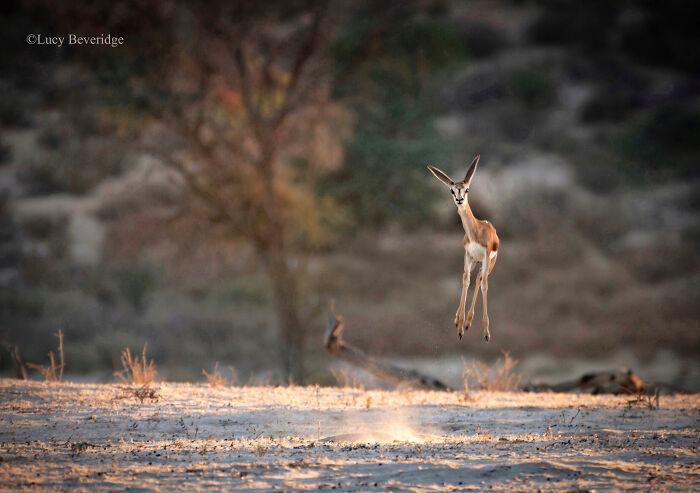 Những khoảnh khắc hài hước 'khó đỡ' của động vật hoang dã