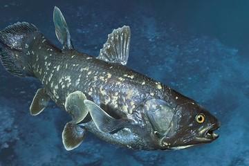 Loài cá chết chóc xuất hiện trước cả khủng long và tồn tại đến tận bây giờ