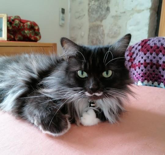 Tá hoả khi phát hiện đang ăn đồ hộp dành cho mèo