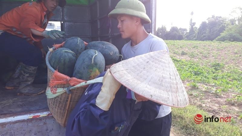 Giá dưa hấu Thanh Hóa rớt thảm, chỉ còn dưới 4.000 đồng/kg