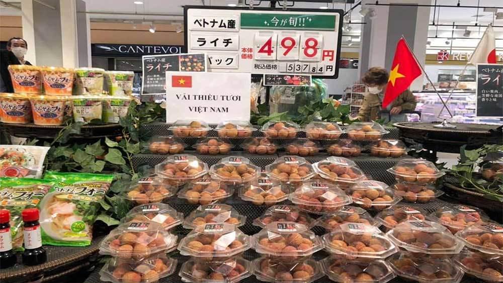 Bắc Giang đưa 20 tấn vải sớm sang thị trường Nhật Bản