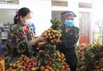 Thực hư thông tin thương lái ép giá, vải Bắc Giang chỉ còn 2.000 đồng/kg?