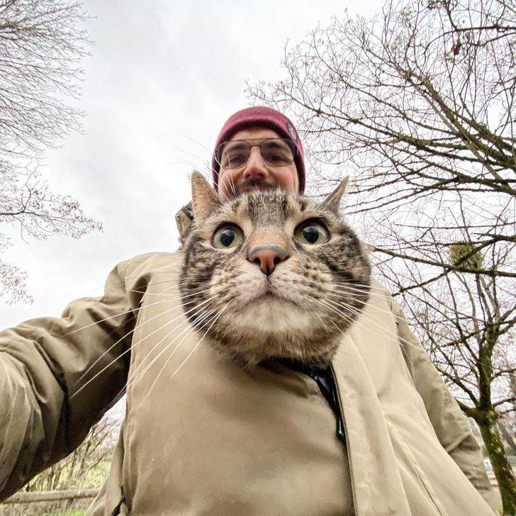 Mèo đi xe máy, đội mũ bảo hiểm cực chất du lịch khắp thế giới