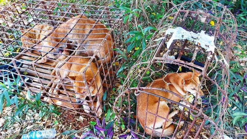 """Nghệ An: Đột kích """"lò chó"""", thu giữ gần nửa tấn tang vật chó câu trộm và nhiều hung khí"""