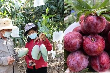Nông dân Sơn La đưa nông sản lên sàn thương mại điện tử, livestream bán hàng trực tiếp
