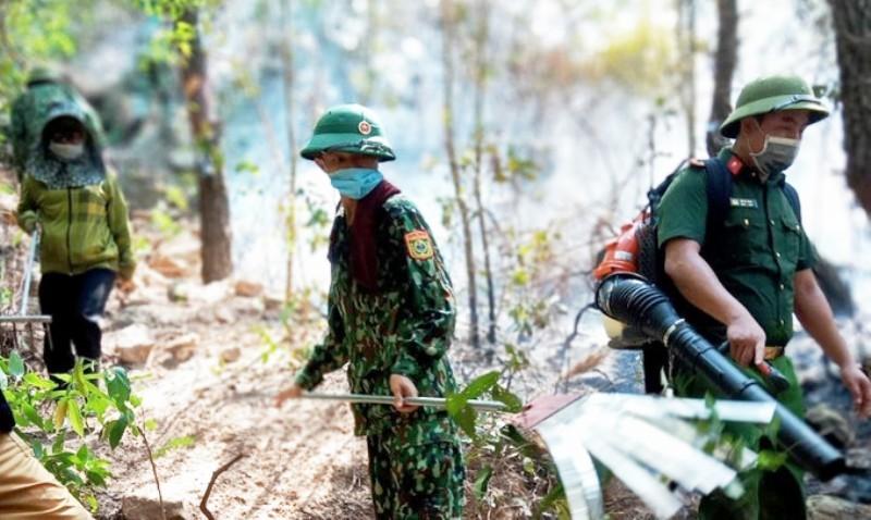 cháy rừng,rừng thông,Nghệ An,nắng nóng
