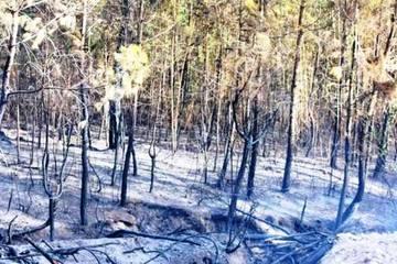 Nghệ An: Hàng trăm người hối hả dập tắt đám cháy rừng thông lúc giữa trưa