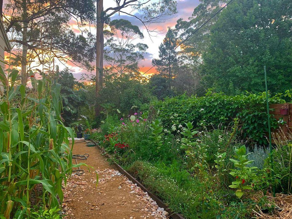 australia,làm vườn.