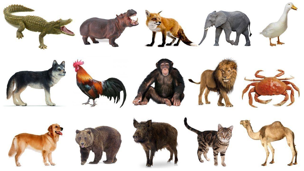 Câu đố con vật cho trẻ em