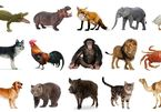 Chọn lọc 25 câu đố dân gian Việt Nam về con vật cực kỳ thú vị
