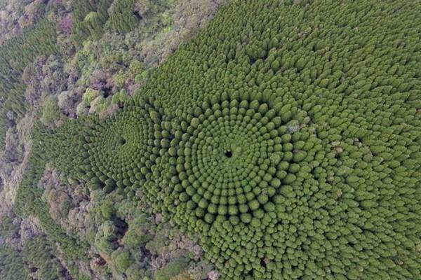 nhật bản,người ngoài hành tinh,cây xanh,tự nhiên