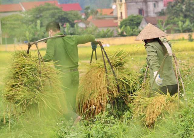 công an,gặt lúa,người dân,bắc giang,giúp dân,hình ảnh đẹp