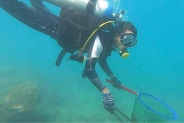 Nhiều hoạt động làm sạch biển Cù Lao Chàm