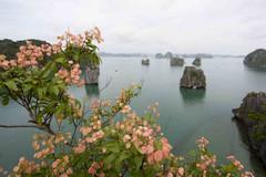 Quảng Ninh: Phát triển du lịch gắn với bảo tồn