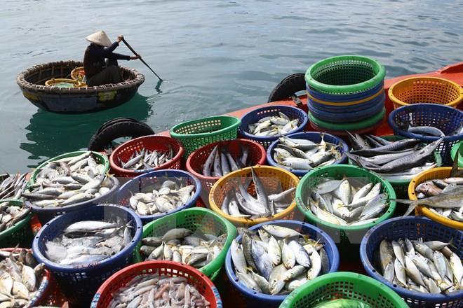 Kiên Giang: Sản xuất thủy sản 5 tháng đầu năm đạt hơn 12 nghìn tỷ đồng