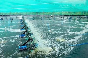 Bình Thuận phòng, chống dịch bệnh nguy hiểm trên thủy sản nuôi